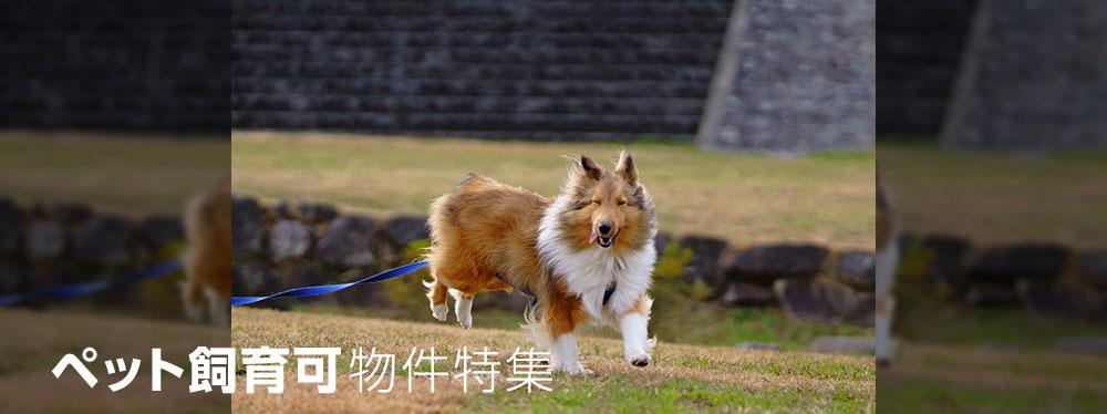 ペット飼育可/京都